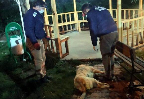 Zehirlenen köpeklerle ilgili 1 kişi gözaltında