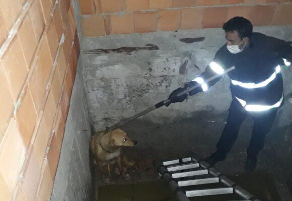 Mahsur kalan köpeğin yardımına koştular