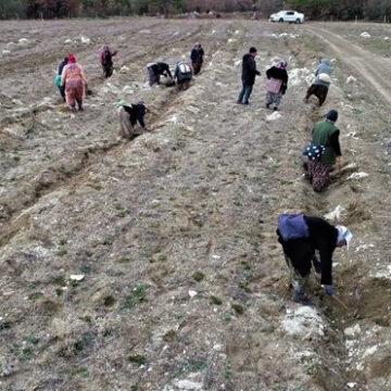 Orman köylerine gelir getirici destek
