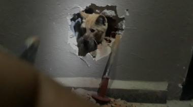 Mahsur kalan kedi duvar kırılarak kurtarıldı