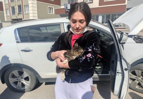 Otomobilin motor kısmında mahsur kalan kedi kurtarıldı